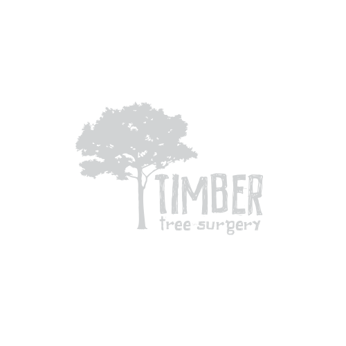 timber tree surgeon
